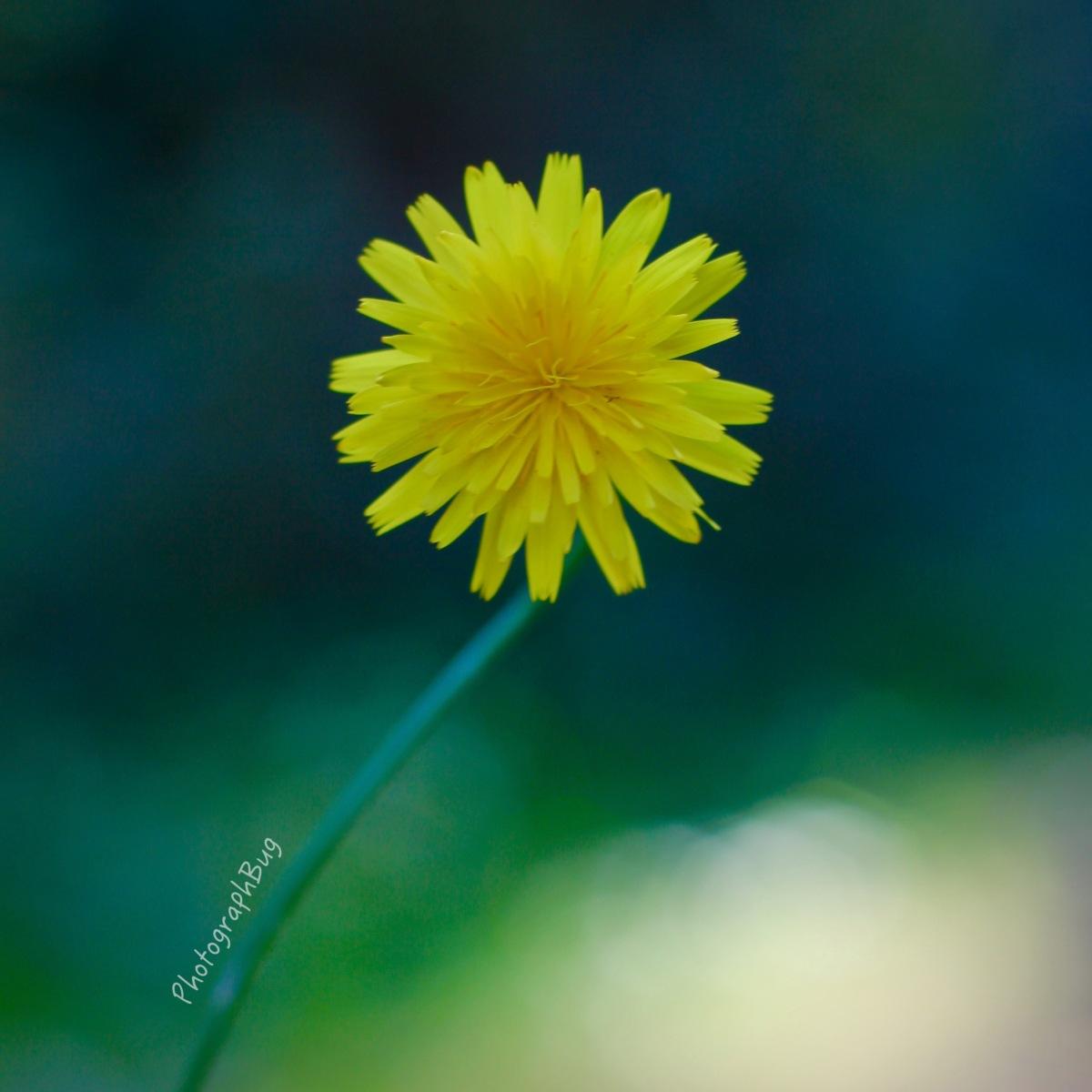 Yellow Flower Nature Plant Leaves Leaf Macro .jpg